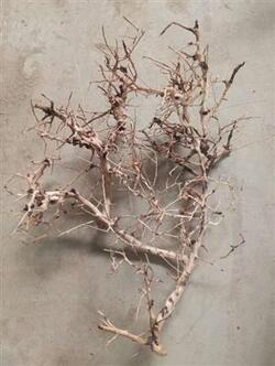 AQUASCAPING ROOT 25-35 CM.