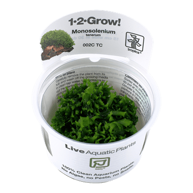 1-2-Grow. Monosolenium tenerum